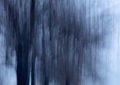 DSC9674wintertrees
